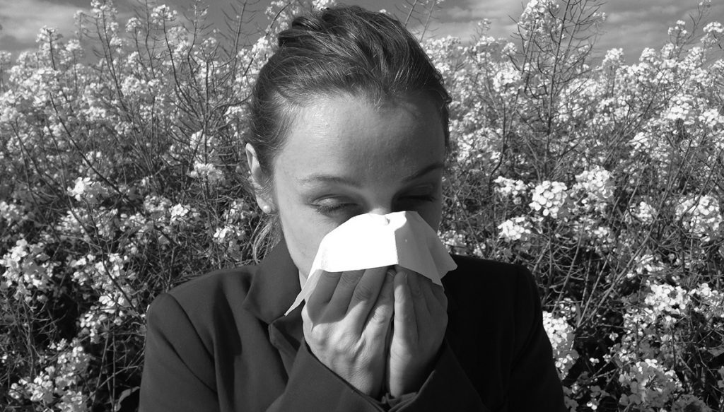 probiotics and hay fever